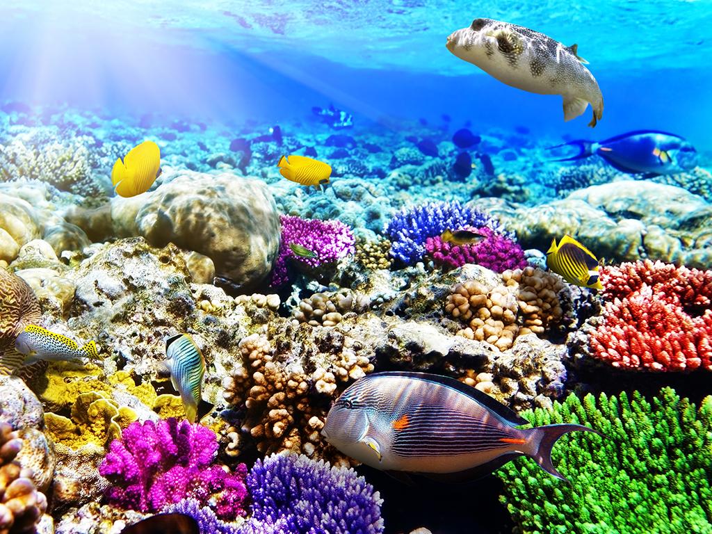 Comment se rendre en Polynésie?