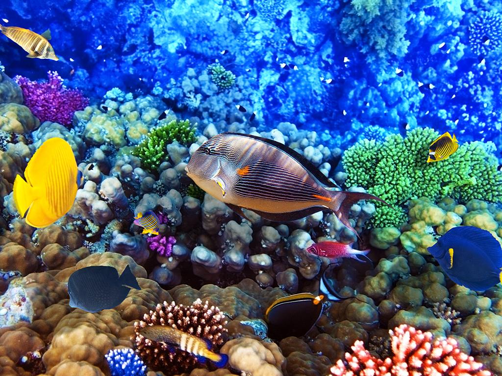 Visites en Polynésie