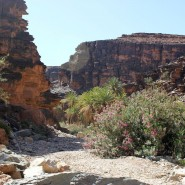 Location sud marocain: