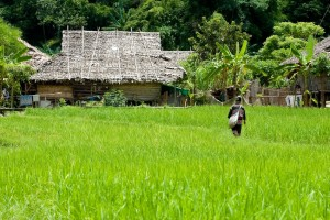 Photos of Baan Tong Luang of Chiang Dao Area In Chiang Mai, Thailand