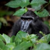 Sulawesi, L'intrigant paradis vert