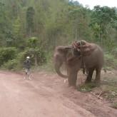 Jules Classic Rental, Rent bikes in Laos – Location de motos au Laos
