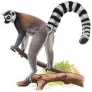 Un voyage des plus authentique à Madagascar