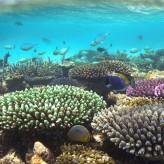 Voyagez en Indonésie et découvrez l'association Coral Guardian