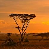 Safari en Afrique du Sud, partez à la rencontre de la nature sauvage de l'Afrique