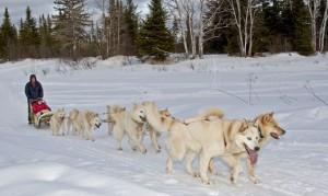 Traineau-chiens-quebec01