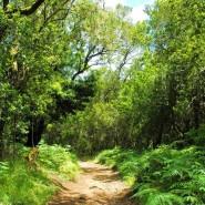 La Gomera, un paradis pour les amoureux de la nature!