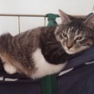 Dormez avec votre chat à l'hôtel de Verdun Nevers
