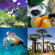 A la rencontre de la faune et la flore de Madagascar