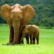 Safari africain dans le Botswana