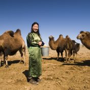 Spécialités culinaires en Mongolie et en Ouzbékistan
