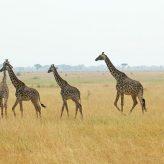 Quelle découverte vous attend au Serengeti ?