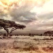 Safari en Afrique : Que mettre dans les valises ?