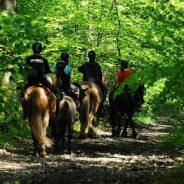 Le Centre Equestre de la Lys est situé au cœur de la Suisse Normande