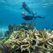 Pratiquez la plongée sous-marine de manière sportive
