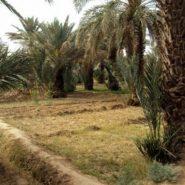 Les merveilles de la nature à découvrir au voisinage de l'auberge de Moha