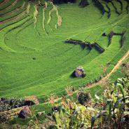 Voyage Vietnam gracieux 11 jour 10 nuits