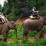 Partir à la découverte de la Thaïlande au cœur d'une aventure surprenante