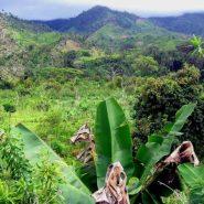Madagascar : une destination à découvrir