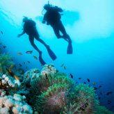 Pourquoi la plongée sous-marine est l'expérience ultime de vos vacances à l'Ile Maurice